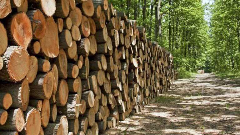 khai thác gỗ